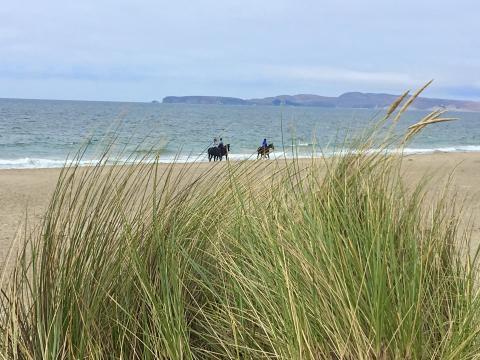 Photo : immense plage à Point Reyes avec chevaux.