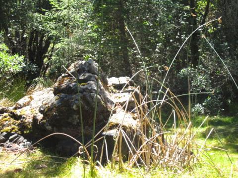 Photo : Un coin de nature sur le Mont Tamalpais