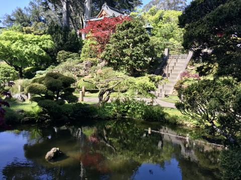 [Photo : Jardin japonais San Francisco au printemps]