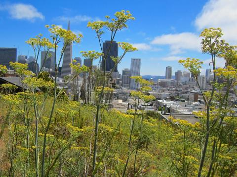 Photos : Downtown et fleurs San Francisco