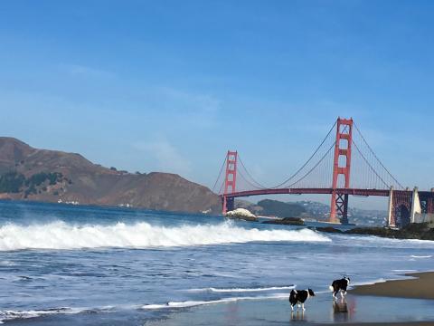 [Photo : Plage de San Francisco]